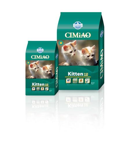 Cimiao Kitten