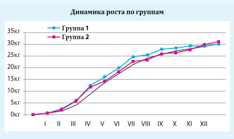 Динамика роста